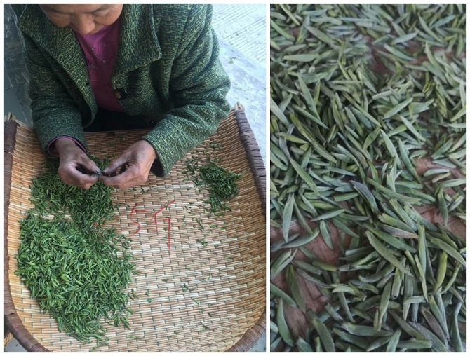 Qinba tea leaves, photo credit: Qinba Tea